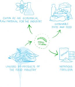 Possible uses of the mealworm